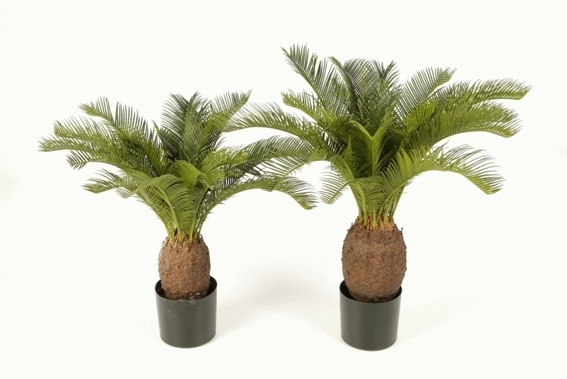 cycas palme 70 cm. Black Bedroom Furniture Sets. Home Design Ideas