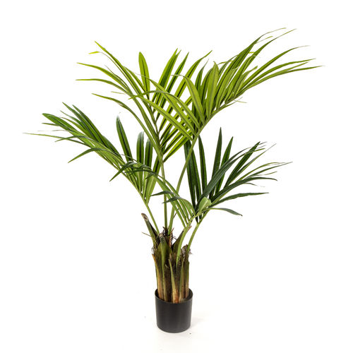 Kentia Palme - Natural - 110 - 140 cm